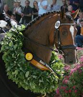Classical Sales Warendorf - Erste Sichtung der Pferde fuer die CSW-Auktion