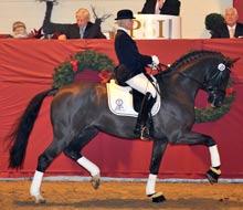 PSI Auktion 2011 - Hengst Der Designer bringt 1,1 Millionen Euro