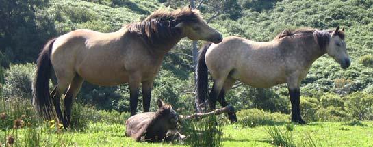 Wie Pferde in Irland unter der Finanzkrise leiden