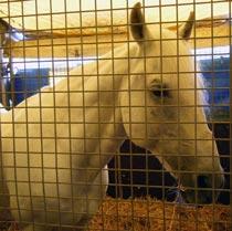 Tierschutz - PETA kritisiert das Landgestuet Marbach