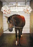 Weinsberger Pferdesolarium / Besonnungsanlagen